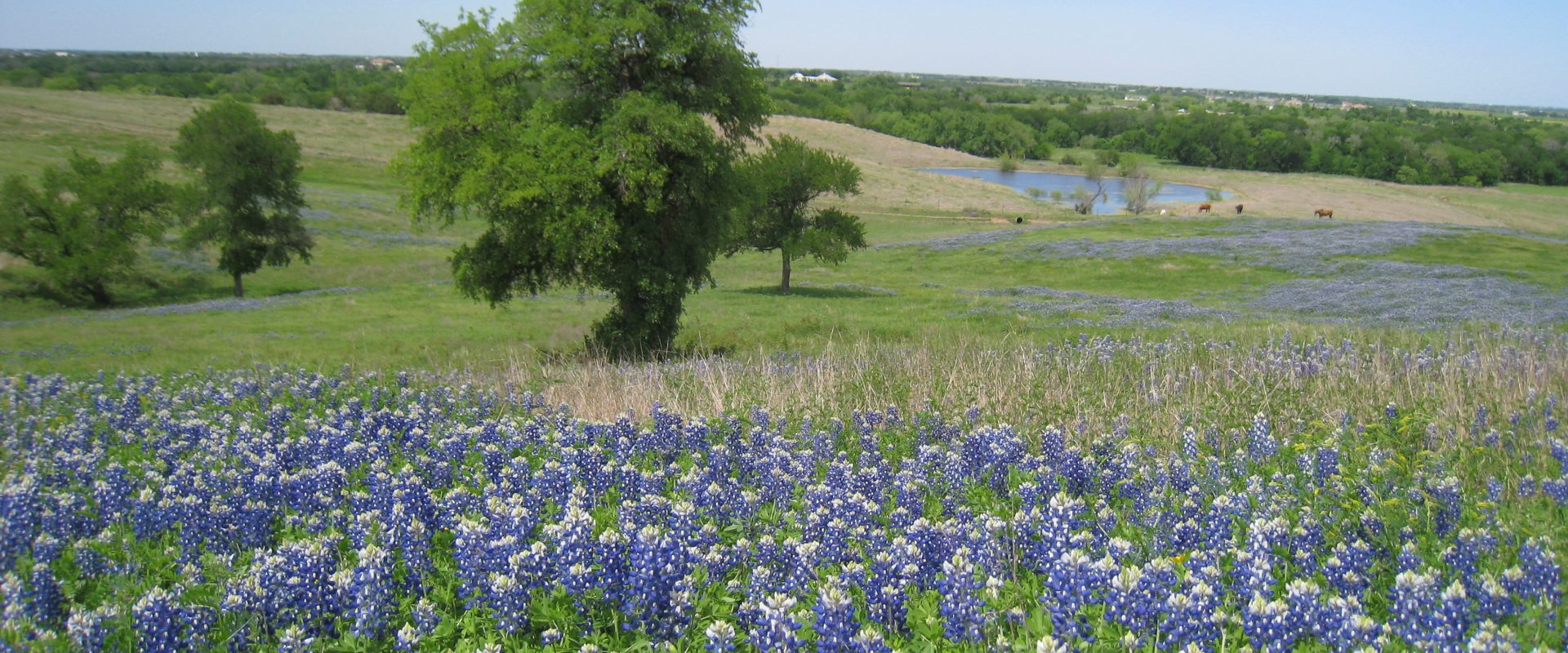 Ranchers' and Landowners' Association of Texas Candidate  Forum